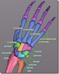 bonelab_hand_01